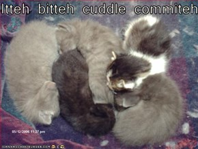 Itteh bitteh cuddle commiteh