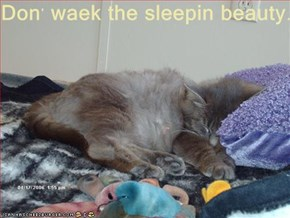 Don' waek the sleepin beauty.