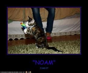"""""""NOAM"""""""