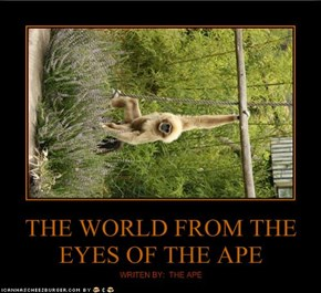 THE WORLD FROM THE EYES OF THE APE