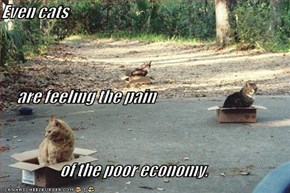 Even cats       are feeling the pain                    of the poor economy.