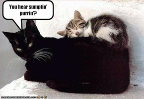 You hear sumptin' purrin'?