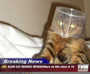Breaking News - ALEIN CAT INVADES NEVADA!More on this story at 10