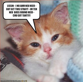 LISSIN - I NO AHM NEU HEER - BUT GET TIHS STRAYT - IM TEH NEU  BOSS ROUND HEER - CHU GOT TAHT!!!!
