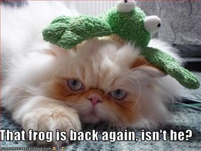 That frog is back again, isn't he?