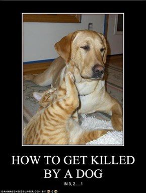 HOW TO GET KILLED BY A DOG