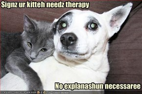 Signz ur kitteh needz therapy