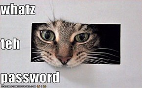 whatz teh password