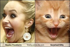 Hayden Panetierre Totally Looks Like Surprised Kitty