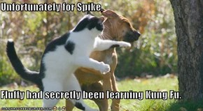 Unfortunately for Spike,  Fluffy had secretly been learning Kung Fu.