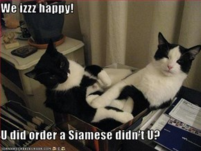 We izzz happy!  U did order a Siamese didn't U?