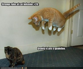 Strange rules of cat behavior #20: