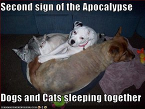 Second sign of the Apocalypse  Dogs and Cats sleeping together