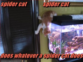 spider cat              spider cat     does whatever a spider cat does