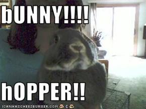 bUNNY!!!!  hOPPER!!