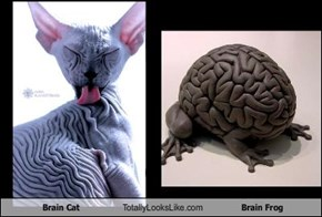 Brain Cat Totally Looks Like Brain Frog