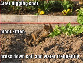 After digging spot, plant kitteh, press down soil and water frequently
