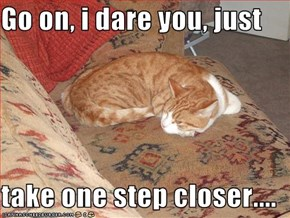 Go on, i dare you, just   take one step closer....