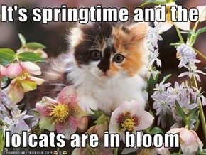 It's springtime and the   lolcats are in bloom