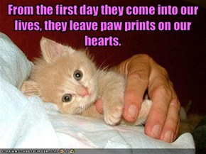 From the first day they come into our lives, they leave paw prints on our hearts.