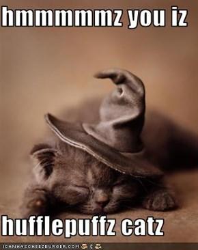 hmmmmmz you iz  hufflepuffz catz