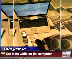 This just in - Cat texts while on the computer