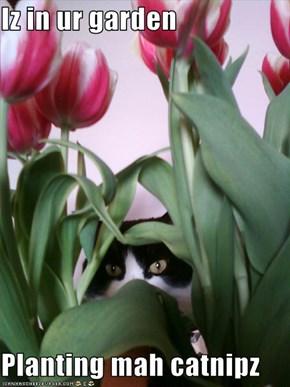 Iz in ur garden  Planting mah catnipz