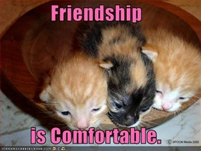 Friendship  is Comfortable.