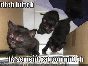 itteh bitteh  basement cat committeh