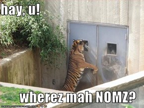 hay, u!  wherez mah NOMZ?