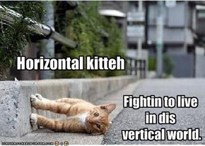 Horizontal kitteh
