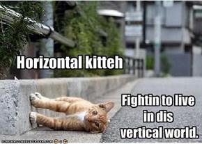 Horizontal kitteh