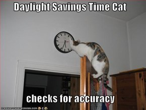 Daylight Savings Time Cat   checks for accuracy