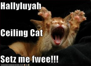 Hallyluyah Ceiling Cat Setz me fwee!!!