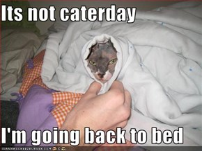 Its not caterday  I'm going back to bed