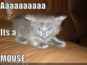 Aaaaaaaaaa Its a MOUSE