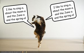 I like to sing-a, about the moon-a and the June-a and the spring-a!