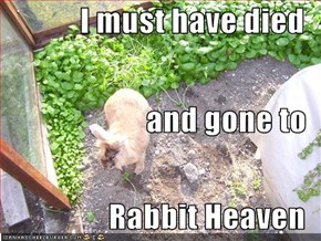 I must have died  and gone to Rabbit Heaven