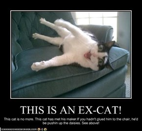 THIS IS AN EX-CAT!