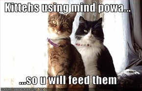 Kittehs using mind powa...  ...so u will feed them