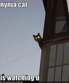 nynja cat  is watching u