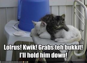 Lolrus! Kwik! Grabs teh bukkit! I'll hold him down!