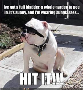 Ive got a full bladder, a whole garden to pee in, it's sunny, and i'm wearing sunglasses...