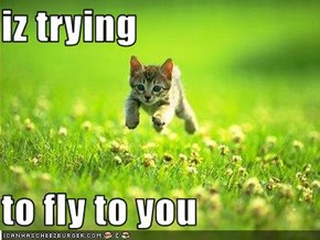 iz trying  to fly to you