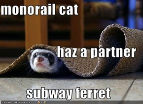 monorail cat haz a partner subway ferret