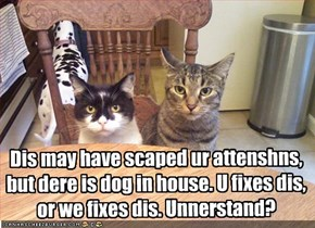 Dis may have scaped ur attenshns, but dere is dog in house. U fixes dis, or we fixes dis. Unnerstand?