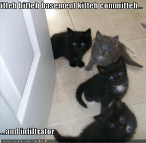 itteh bitteh basement kitteh committeh...  ...and infiltrator