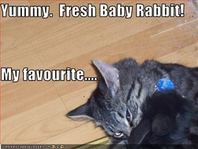 Yummy.  Fresh Baby Rabbit! My favourite....
