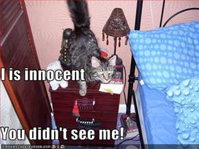 I is innocent You didn't see me!