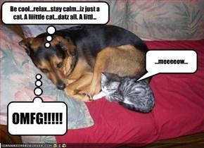Be cool...relax...stay calm...iz just a cat. A liiittle cat...datz all. A littl...